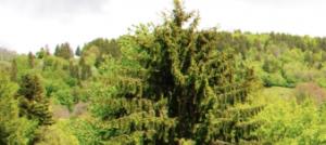 Ferme d'Essertfallon ecovillage – fermes communautaires libres